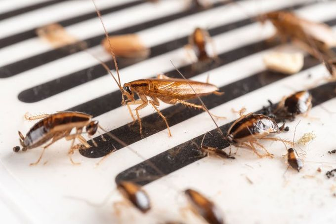 Pest control West Hartford, CT