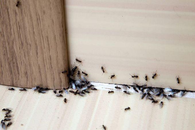 Pest Control East Windsor, CT