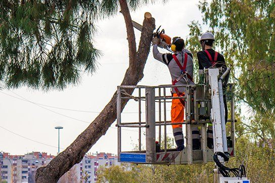 Professional lumberjacks cuts trunks on the crane with a chainsaw