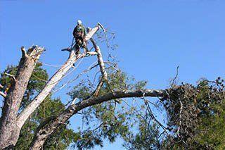 Comprehensive tree care