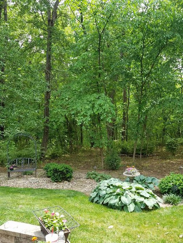 Tree Trimming Services In Overland Park Ks