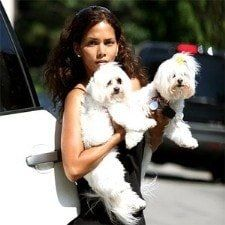 Halle-Berry-Famous-Maltese-dogs