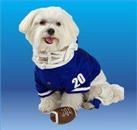 male Maltese dog in football shirt