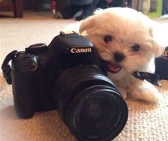 maltese-size-of-camera