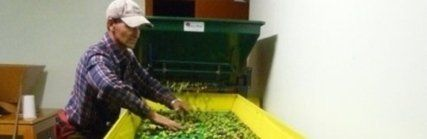 premitura olive