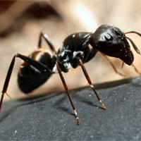 Pest Control - Athens, AL - Reece Pest Control