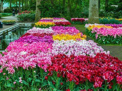Giardino con fiori ben mantenuto