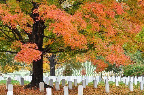 Cimitero in mezzo agli alberi