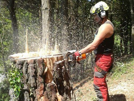 tree grinding