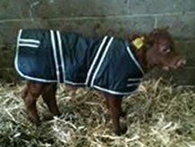 machine washable jacket for calf