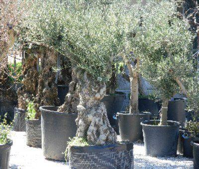 Piante da esterno chiaravalle an vivaio garden nicolini for Piante da vivaio