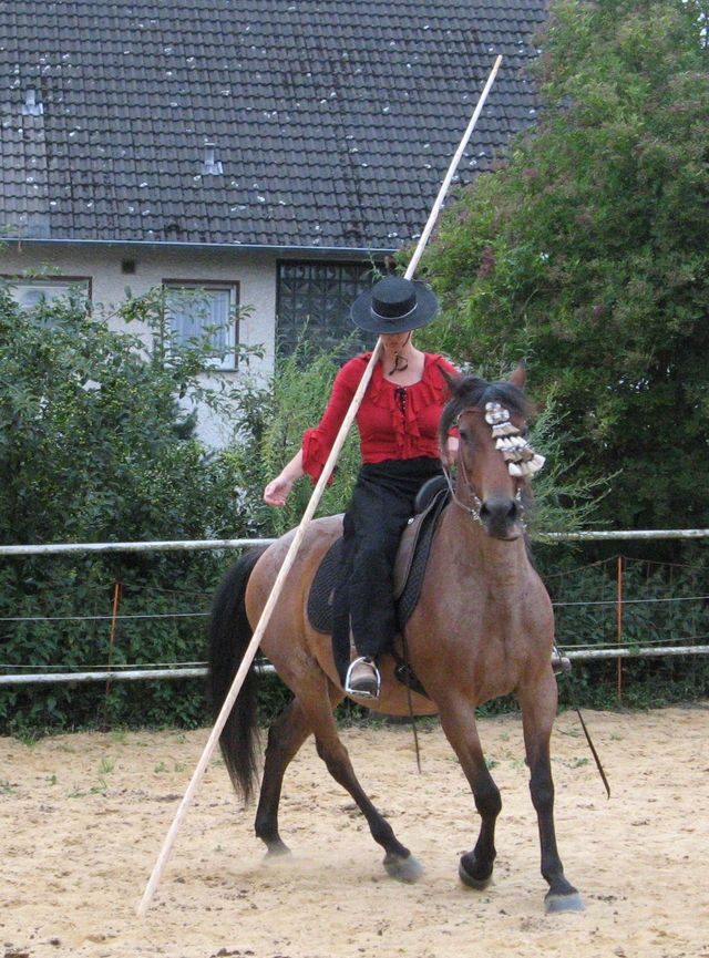 neues pferd kennenlernen