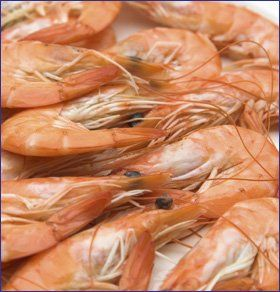 Fresh-seafood---Rochdale,-Greater-Manchester---AO-Seafood-Ltd---sea-food