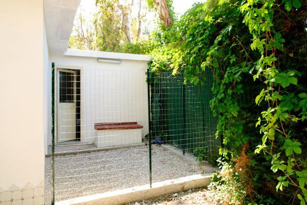 un cespuglio sulla sinistra, una recinzione verde e dietro un piccolo edificio bianco con una porta semi aperta