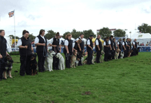 Dog display team