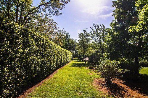 Vista del giardino con gli alberi e le siepi