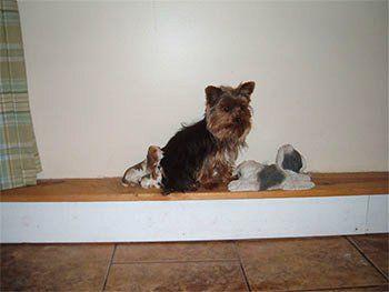 Dog Grooming Lockport, NY