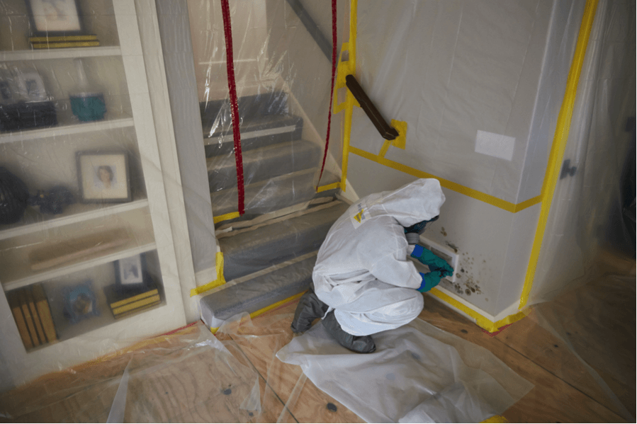 Truth About Mold - Mold Remediation
