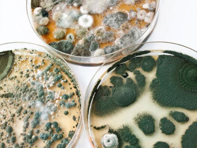 Truth About Mold - Mycotoxins