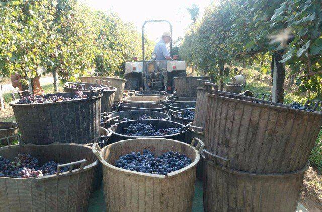 prodotti vinicoli