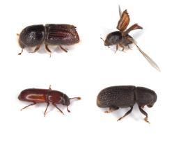 Advanced pest control services in Wailuku, HI