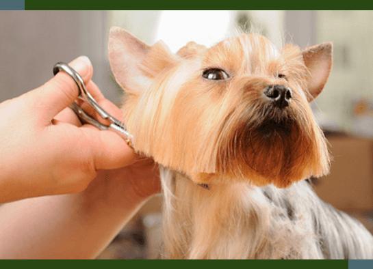Dog Grooming Blasdell, NY