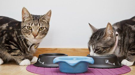 cats being fed