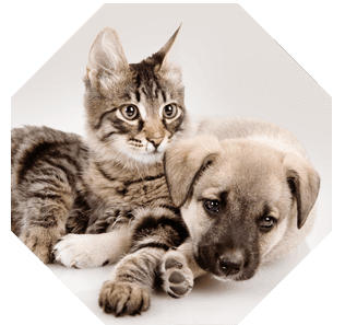 Domestic pet care