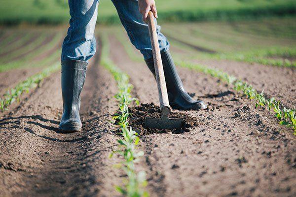 un contadino che sta zappando la terra