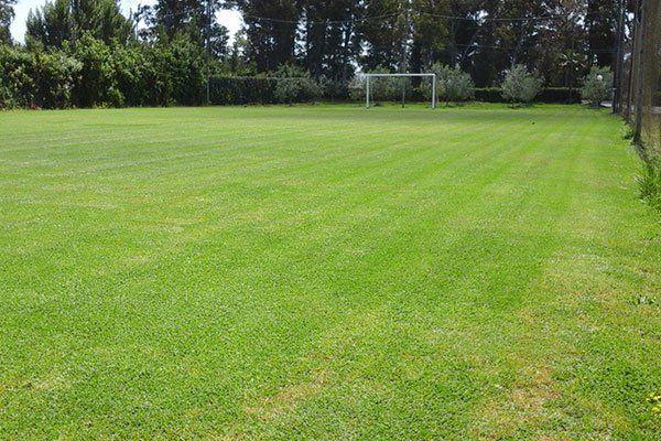 Campo di calcio di erba naturale