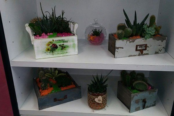 varie composizioni di piante grasse su scaffali bianchi