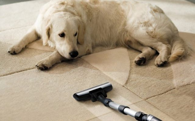 Carpet & Upholstery Cleaning | Wilton, Redding, & Ridgefield, CT