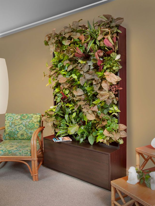 Living green walls indoor plant wall installation for Living plant walls