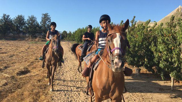 לימוד רכיבה מערבית על סוסים