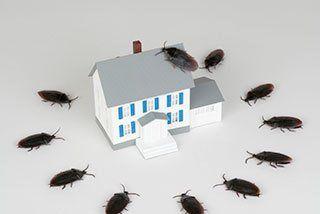 Pest Control Midland & Odessa, TX