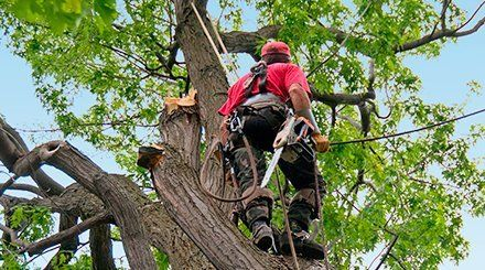 Tree care by the specialists