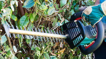 Hedge and shrub care