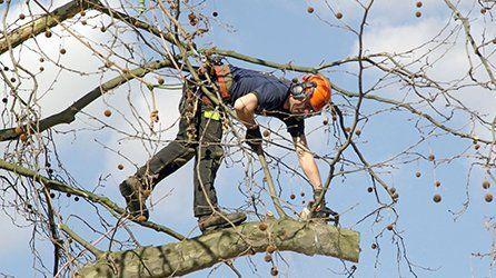 Expert tree work