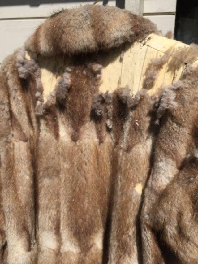 clothes moth damaged fur coat