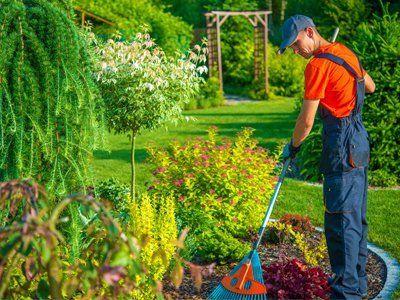 Giardiniere ripulendo il giardino con il rastrello