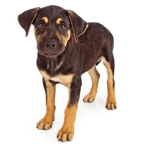Dog Day Care Amherst, NY