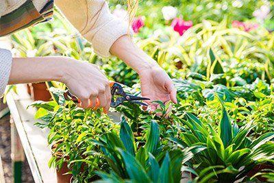 Potatura e manutenzione del giardinaggio ad Albignasego