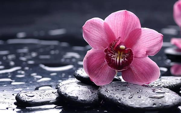 una ninfea rosa su dei sassi