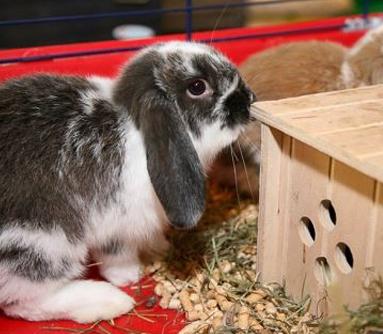 cuccioli di coniglio, gabbiette, animali da compagnia