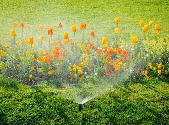 irrigazione su fiori in giardino