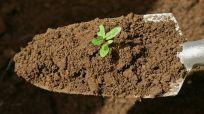 Landscaping material in Cinncinnati