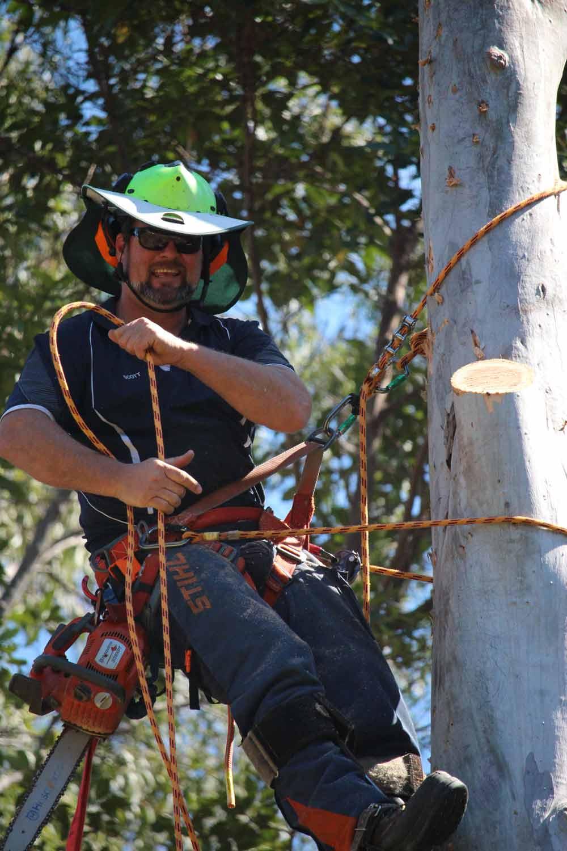 scott hanley in a tree