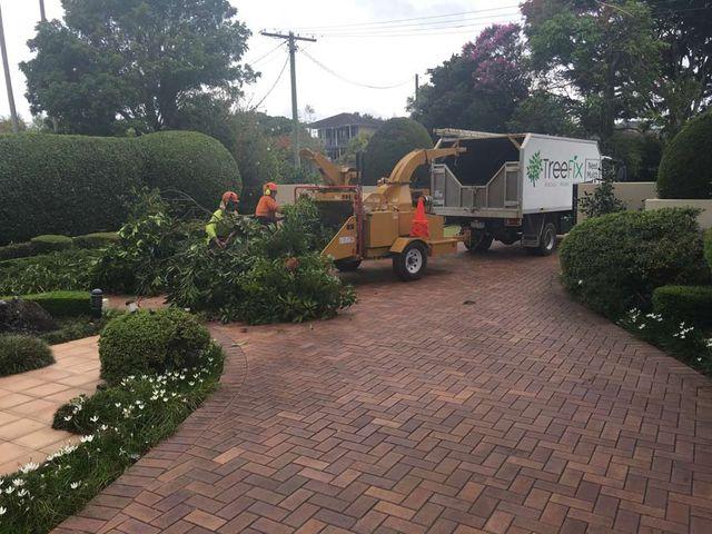 Tree pruning machine on the Sunshine Coast