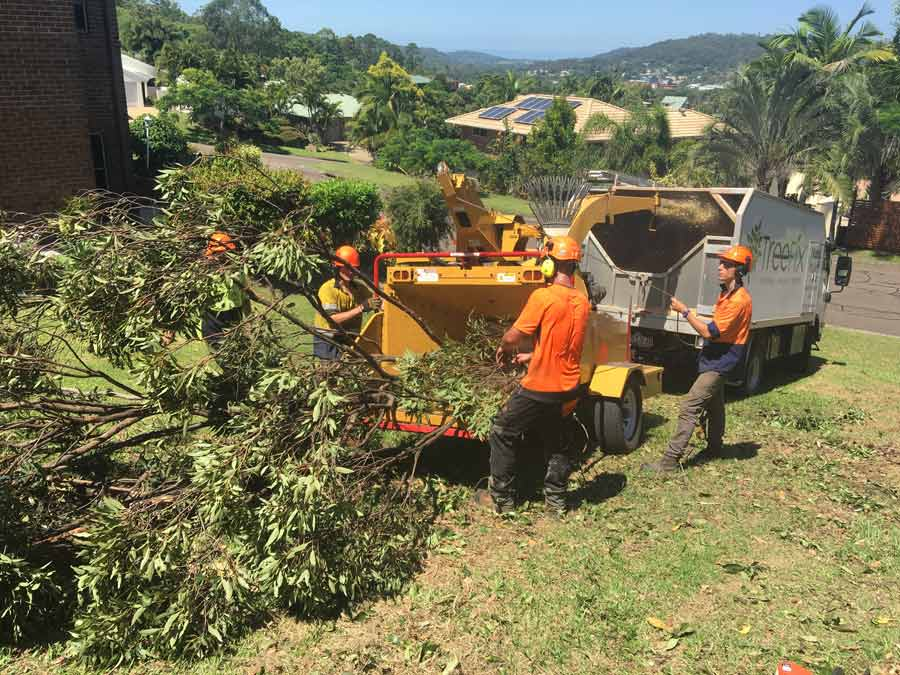 crew grinding down a tree