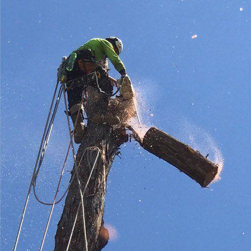 Tree services on the Sunshine Coast